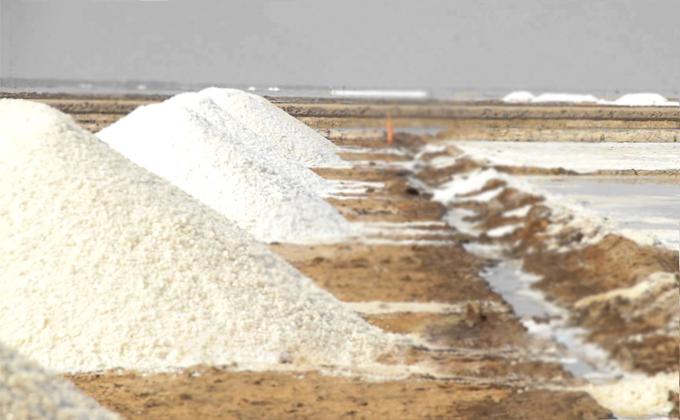 Salt Industry India